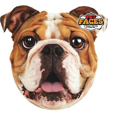Pet faces english bulldog