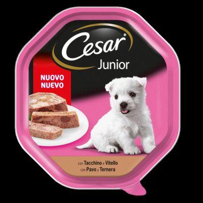 Cesar vasc junior vitello tac