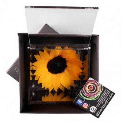 Flowercube girasole