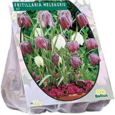 Fritillaria meleagris bulbi PZ. 30