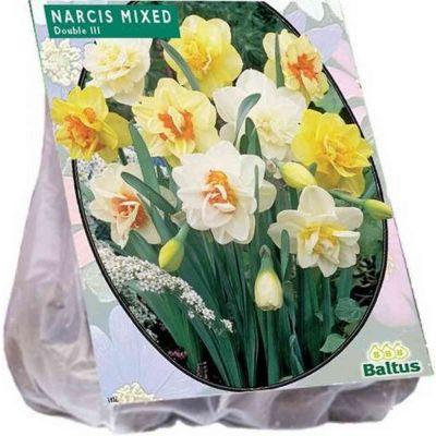 Narcis dubbel mix bulbi PZ. 20