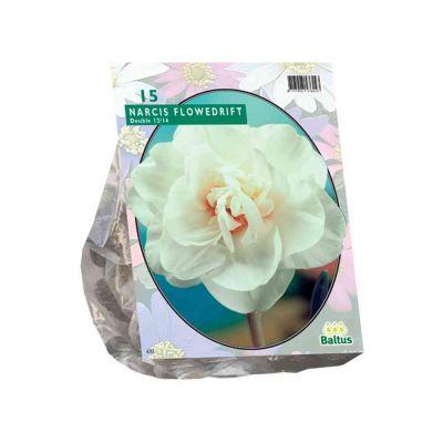 Narcis flower drift bulbi PZ. 15