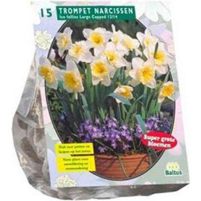 Narcis ice follies bulbi PZ. 15