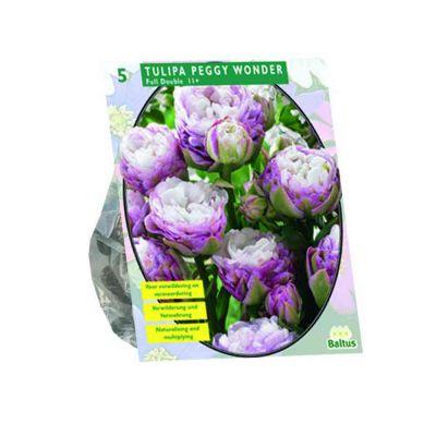 Tulipa peggy wonder bulbi x5