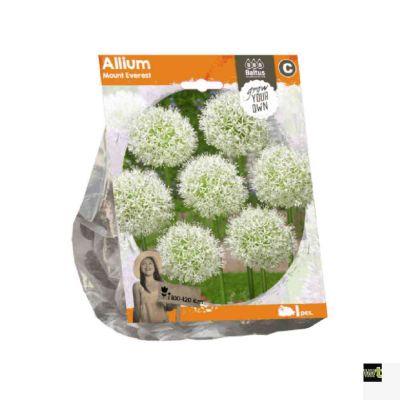 Allium mount everest (sp)