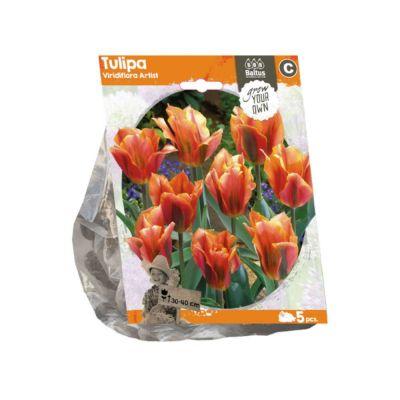 Tulipani viridiflora artist