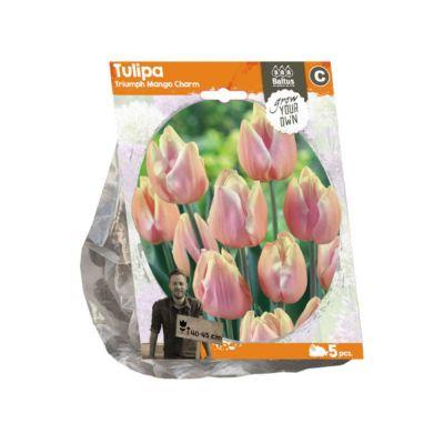 Tulipano triumph mango charm