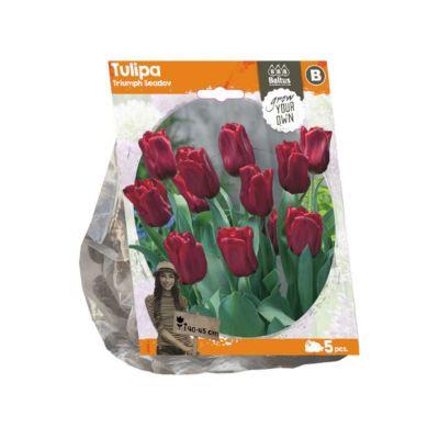 Tulipani triumph seadov