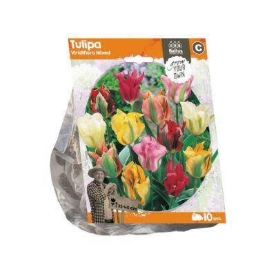 Tulipani viridiflora mixed