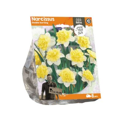 Narciso double ice king