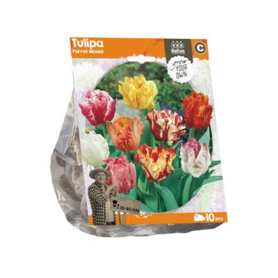 Tulipani parrot mixed