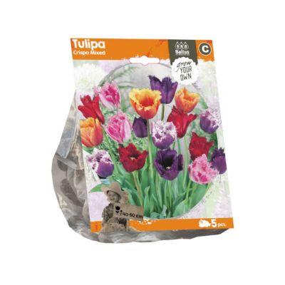Tulipani crispa mixed