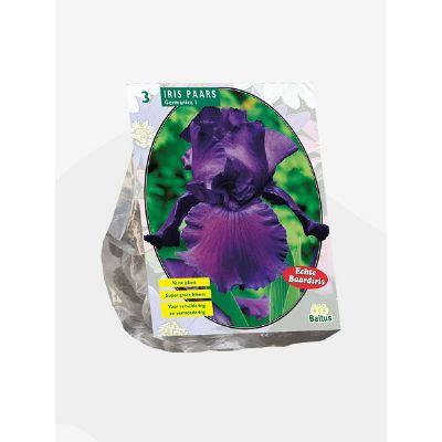 Iris germanica viola bulbi x3