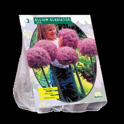 Bulbi Allium Gladiator Excellence x 3