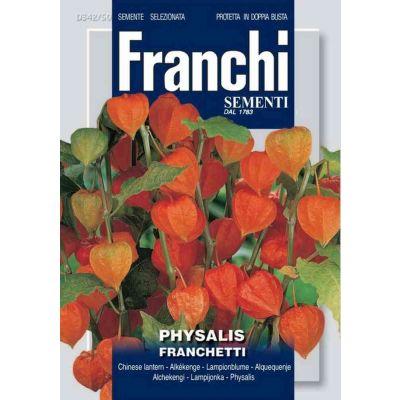 Physalis franchetti db semi