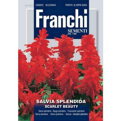 Salvia splendens alta db semi