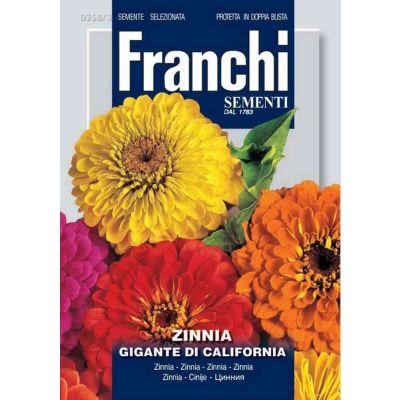 Zinnia gig.california db semi