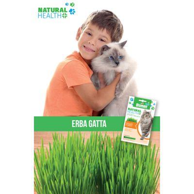Erba Gatta Gatto