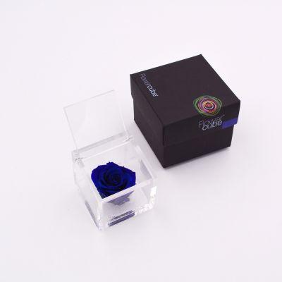 Flowercube | Rosa stabilizzata colore blu (6x6 cm)