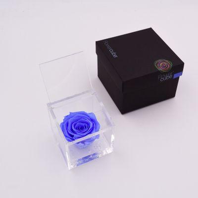 Flowercube | Rosa stabilizzata colore azzurro (8x8 cm)