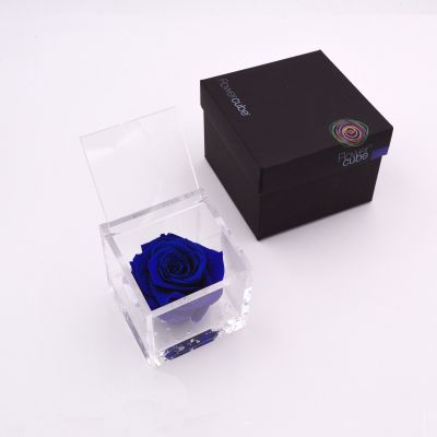 Flowercube | Rosa stabilizzata blu (8x8 cm)