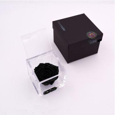 Flowercube | Rosa stabilizzata nera (8x8 cm)