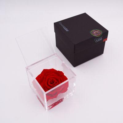 Flowercube | Rosa stabilizzata rosso (10x10 cm)