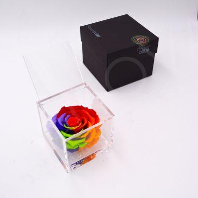 Flowercube | Rosa stabilizzata rainbow (10x10 cm)