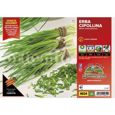 Erba Cipollina H034