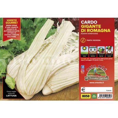 Cardo Gigante Romagna H050