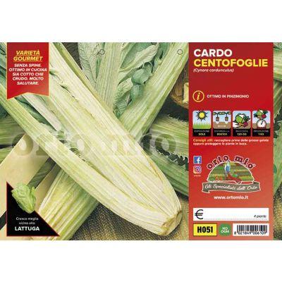 Cardo Cento Foglie H051