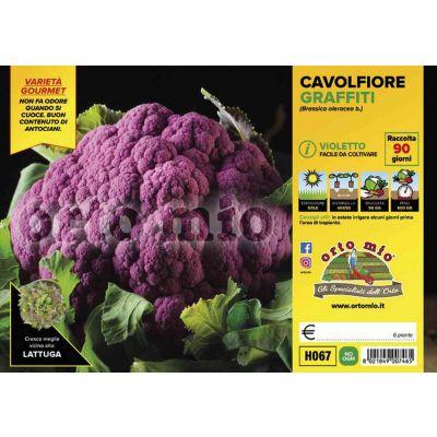 Cavolfiore Purple Queen H067