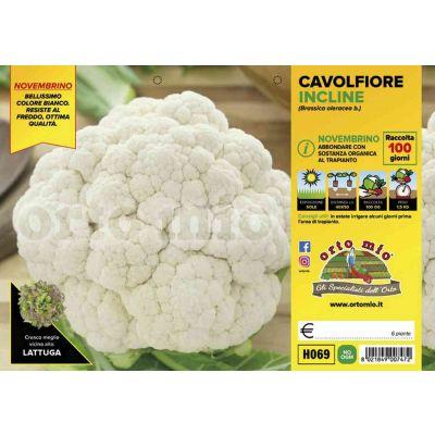 Cavolfiore Incline H069