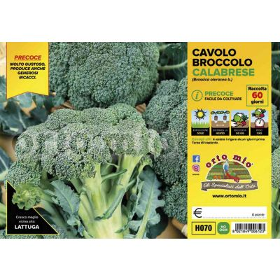 Cavolo Broccolo Heraklion H070
