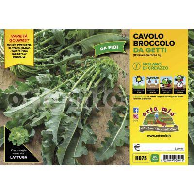 Cavolo Broccolo Di Creazzo
