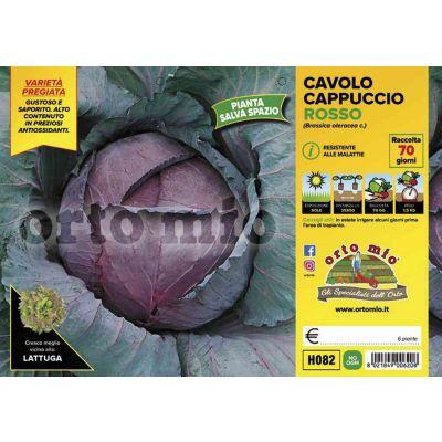 Cavolo Cappuccio Red Jewel