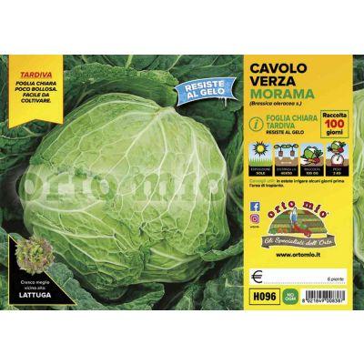 Cavolo Verza Morama