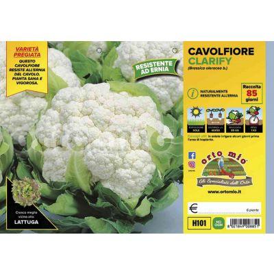 Cavolfiore Clarify H101
