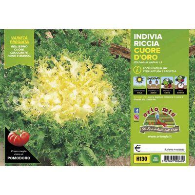 Ricciaindivia Riccia Cigal-Mirna H130