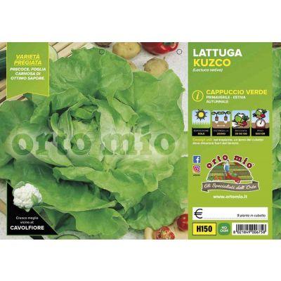 Lattuga Cappuccio Kuzco Verde