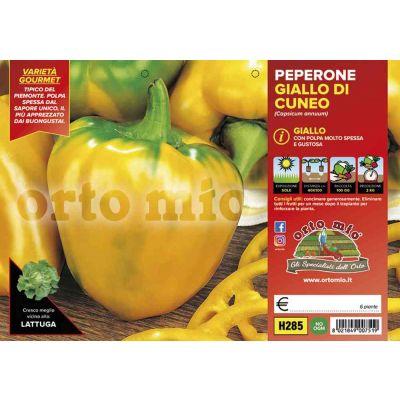 Peperone Cuneo Giallo