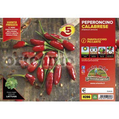 Peperone Picc Diavolicchio