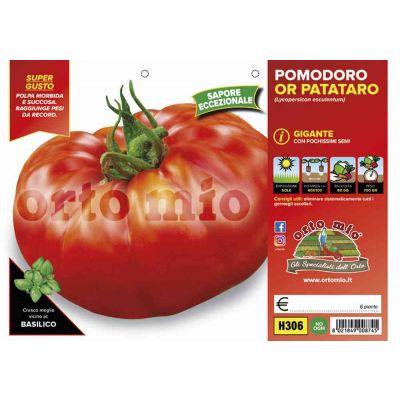 Pomodoro Gigante Or Patataro H306