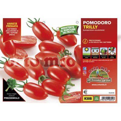 Pomodoro Datterino Trilly H30B