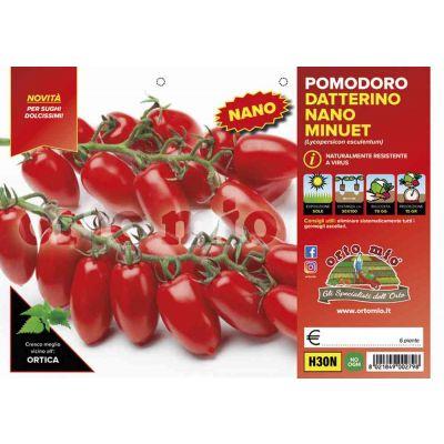 Pomodoro Datterino Nano Minuet
