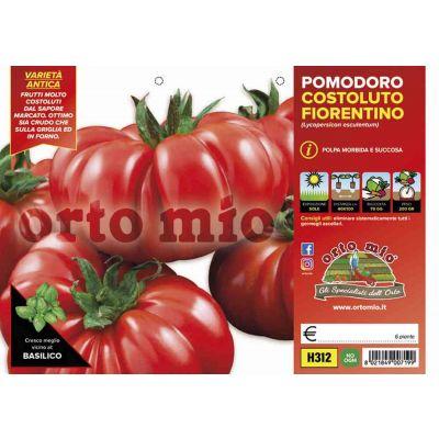 Pomodoro Costoluto Fiorentino H312