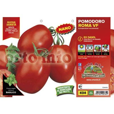 Pomodoro Roma Dawil H314