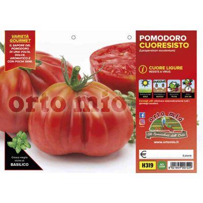 Pomodoro Cuore Ligure Cuoresisto H319