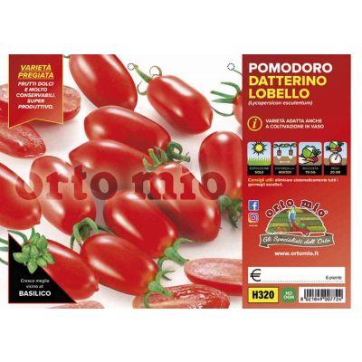 Pomodoro Datterino Lobello