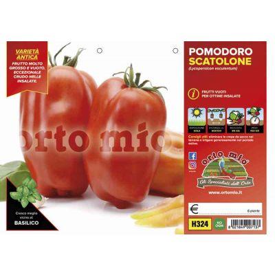 Pomodoro San Marzano Scatolone H324